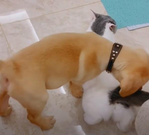 母猫とと仲良くする犬
