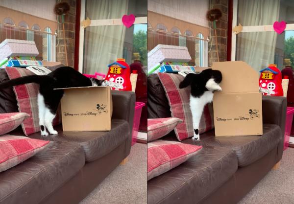 箱に入りたい猫