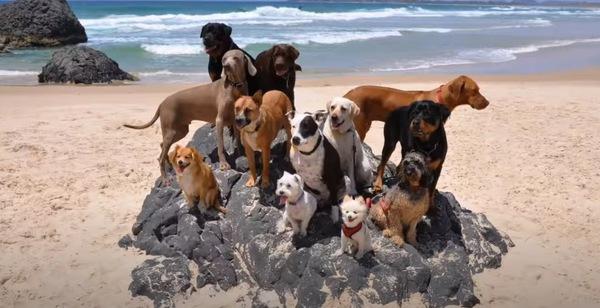海岸にいる犬たち