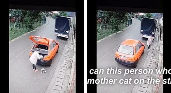 車から猫を放り出す女性