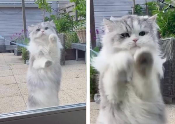 家に入りたい猫