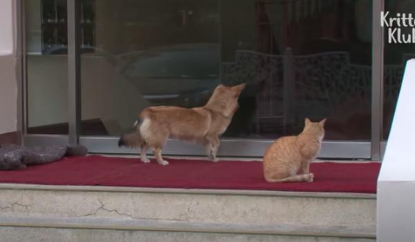 マンションの入り口で飼い主を待つ犬と猫