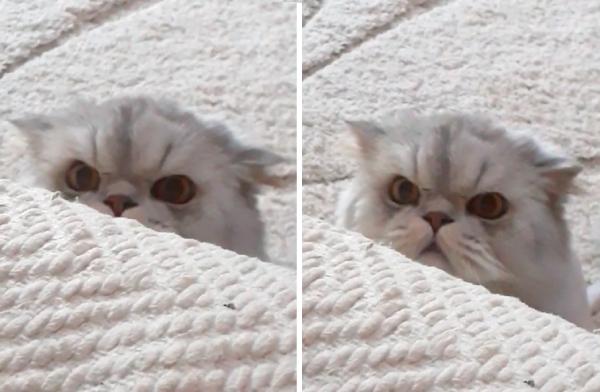 不審の顔をする猫