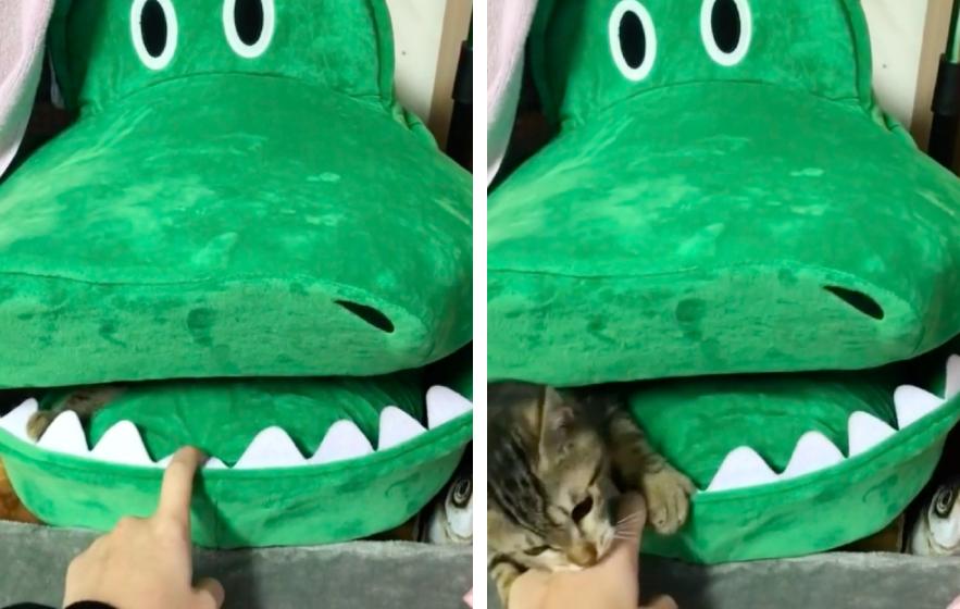 ワニの中にいる猫