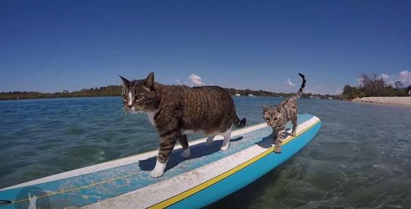 サーフィンを楽しむ2匹の猫