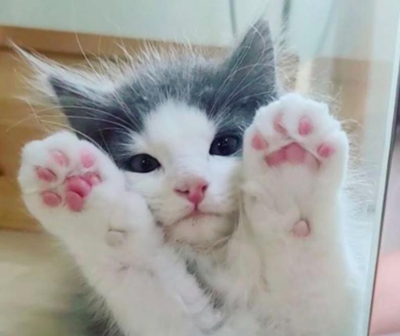 ガラスに張り付く子猫