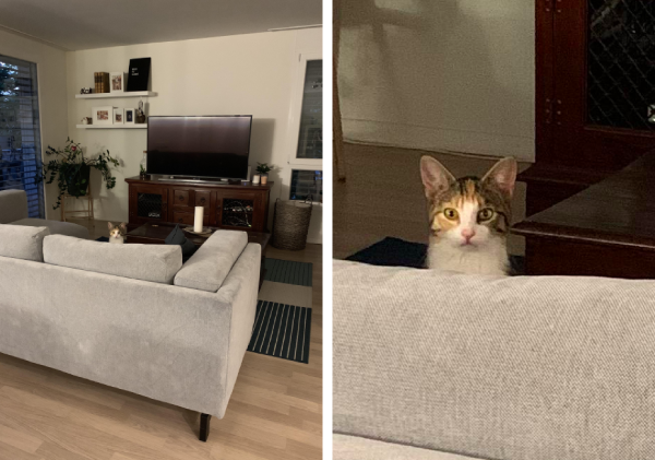 見知らぬ猫