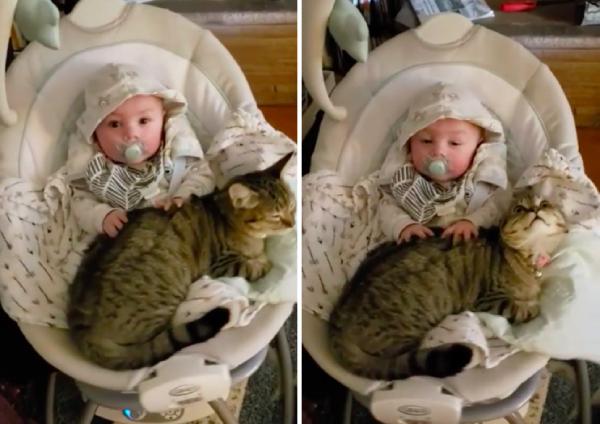 猫をマッサージする赤ちゃん