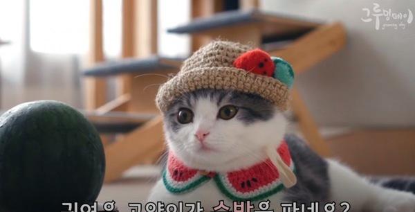 スイカのコスプレをする猫とスイカ