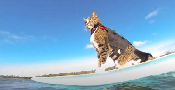 サーフィンする猫