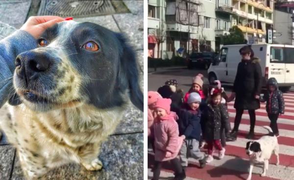 横断歩道で見守る犬