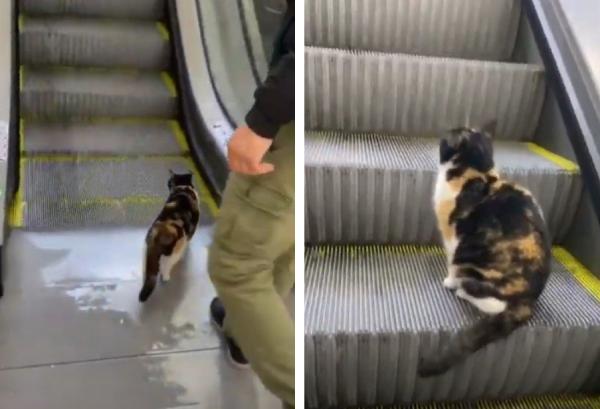 エスカレーターに乗る猫
