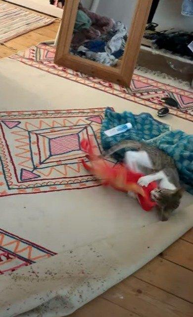 タコのおもちゃに飛びかかる猫