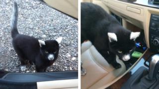 パンダみたいな柄の猫