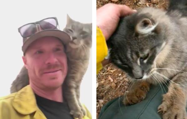 火事から救助された猫