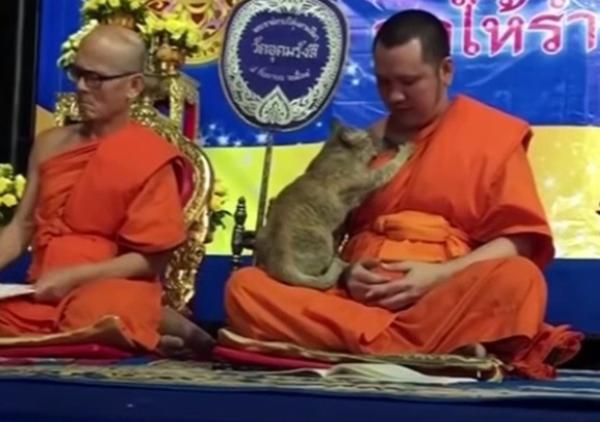 祈りを捧げる僧侶にふみふみする猫