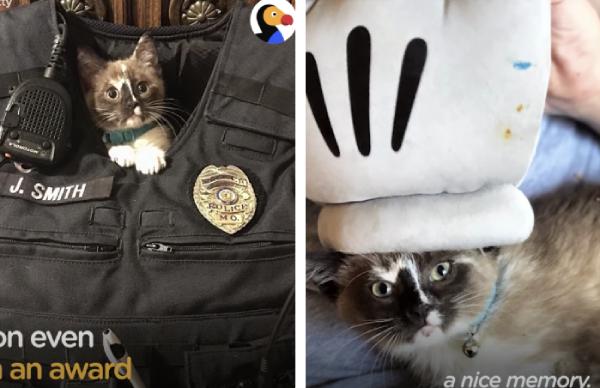 警察官の制服の中にいる猫と子猫を助けた手袋