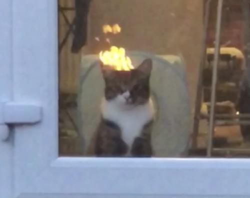 燃えてるように見える猫