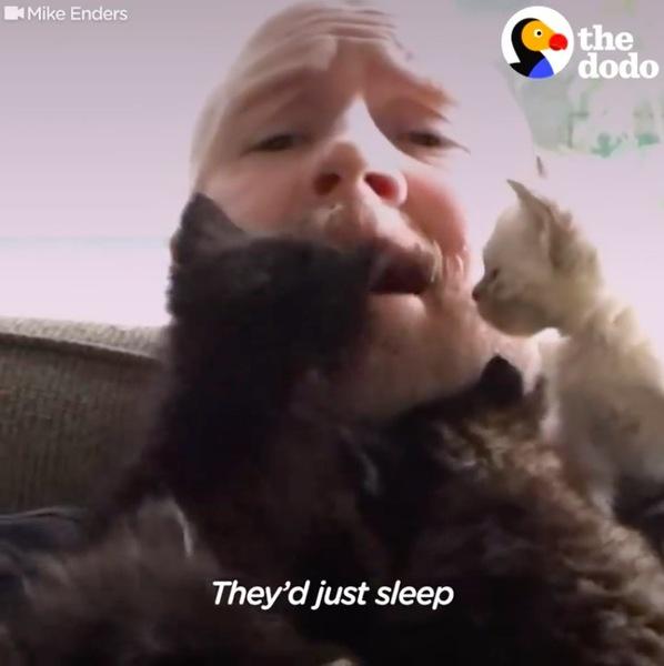 養父に群がる子猫軍団