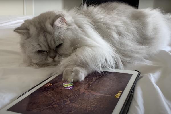 タブレット端末で遊ぶ猫のミルクシェイク