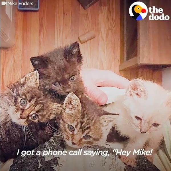 子猫4匹集合