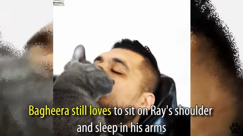 男性と眠る猫