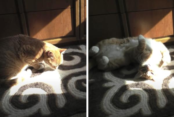 ひなたで寝る猫
