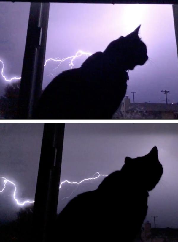 雷を見る猫
