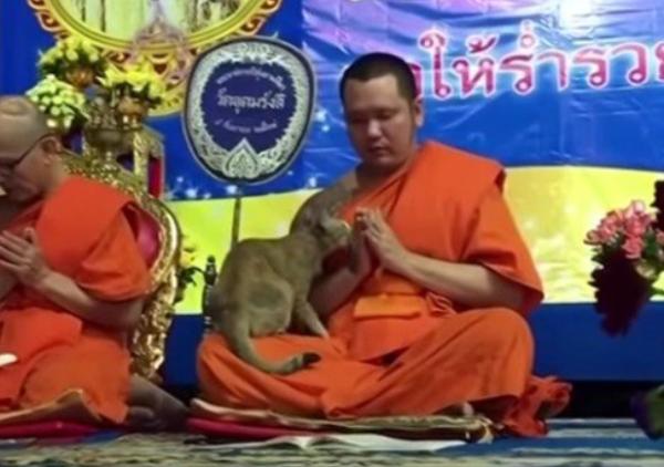 祈りを捧げる僧侶と猫