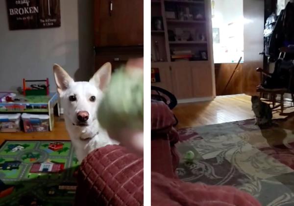 猫の前に落ちたボールに絶望する犬