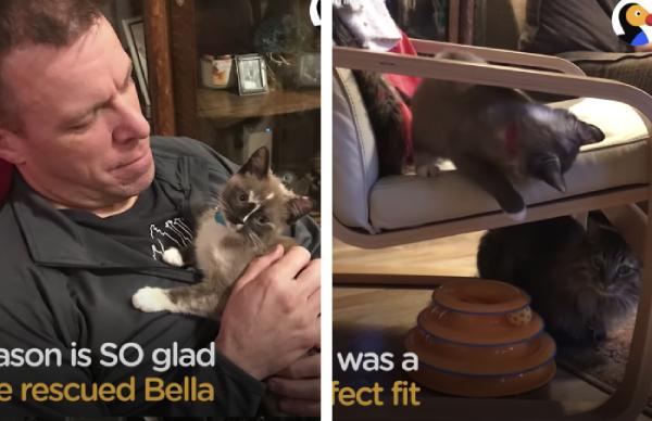 警察官のおうちに引き取られた子猫