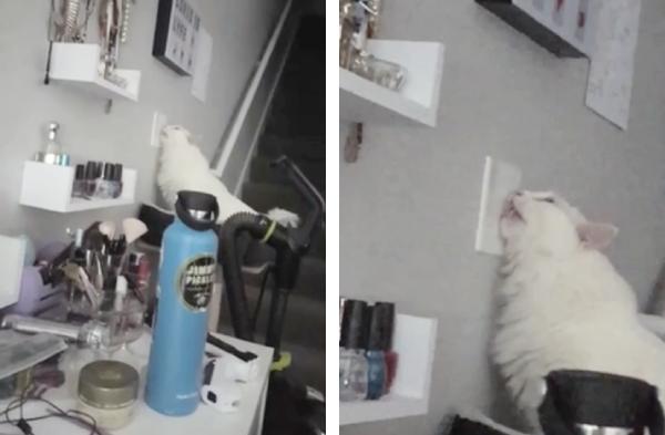 ライトを噛む猫
