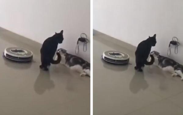 喧嘩しそうな猫