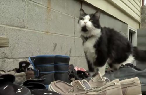 靴泥棒の猫