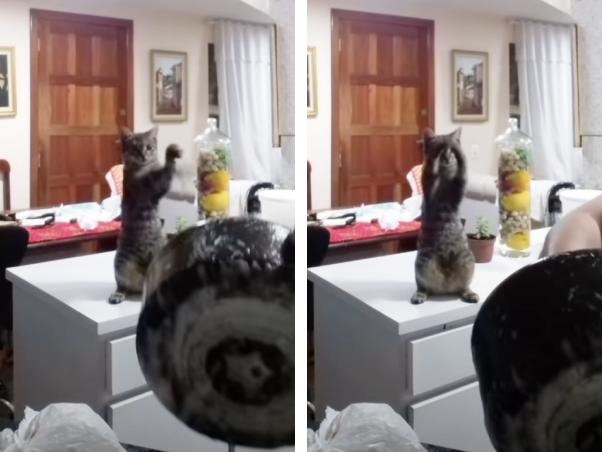 お皿洗いを手伝う猫