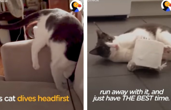 いたずらがすぎる猫