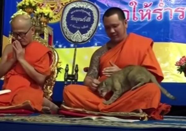 祈りを捧げる僧侶になつく猫