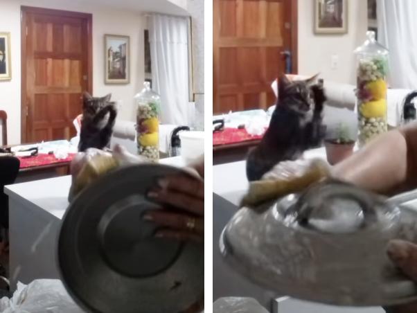 エアお皿洗いをする猫