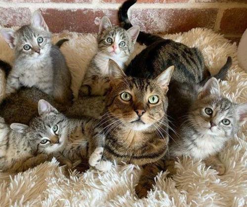保護猫たちの養父がわりの猫
