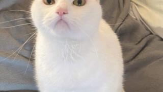 露骨に不満そうな猫