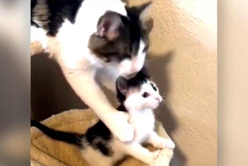 子猫を守るママ猫