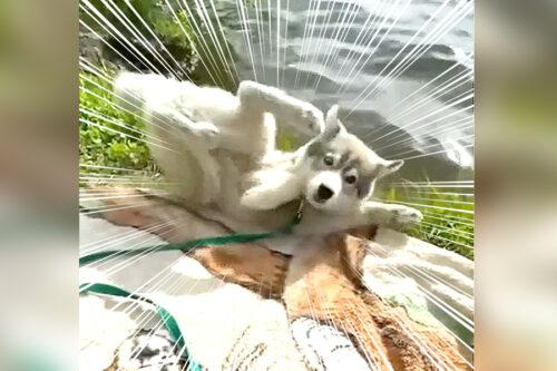 池に落ちる犬