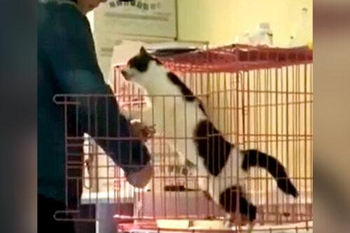 抱っこを求める猫