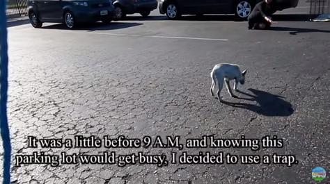 駐車場をうろつく子犬