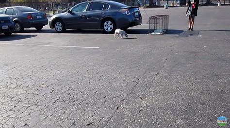 捕獲機を警戒する犬