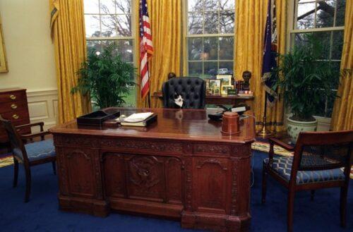 大統領の椅子に座るソックス