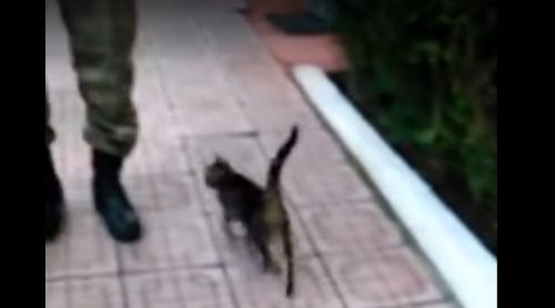 兵隊に近づく猫