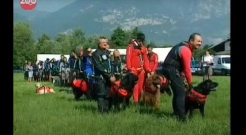 ライフガード犬たち
