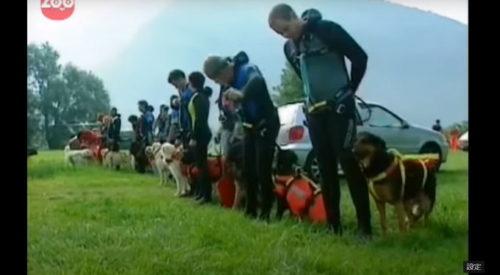 訓練されている犬たち