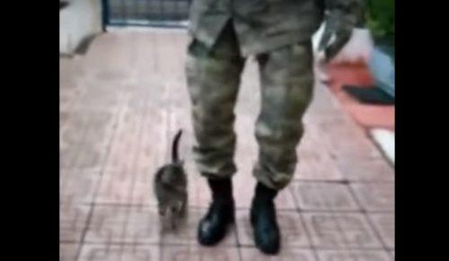 兵隊の隣に並んだ子猫